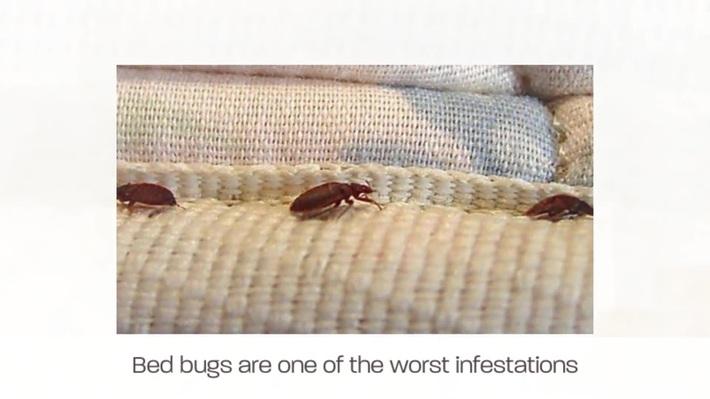 EZ Bed Bug Exterminator New Braunfels