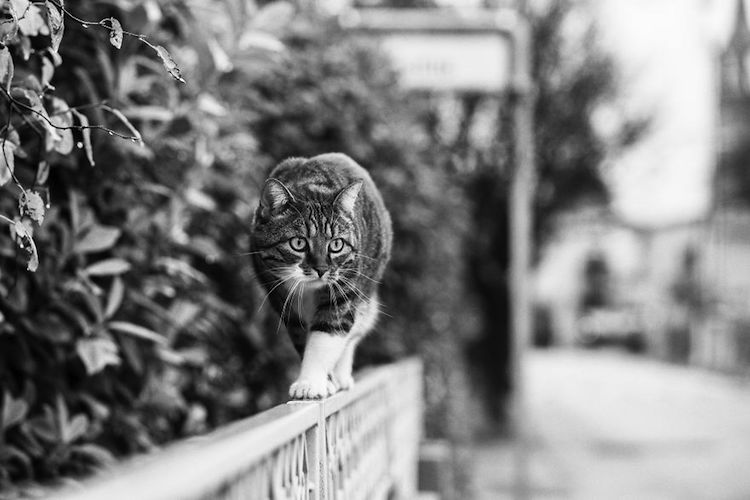 კატები, ფოტოგრაფია, შავ-თეთრი, ბუნება, qwellygraphy, photography, cats