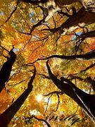 October colors at Michigan State University