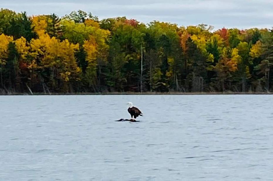 Fall in Michigan beautiful