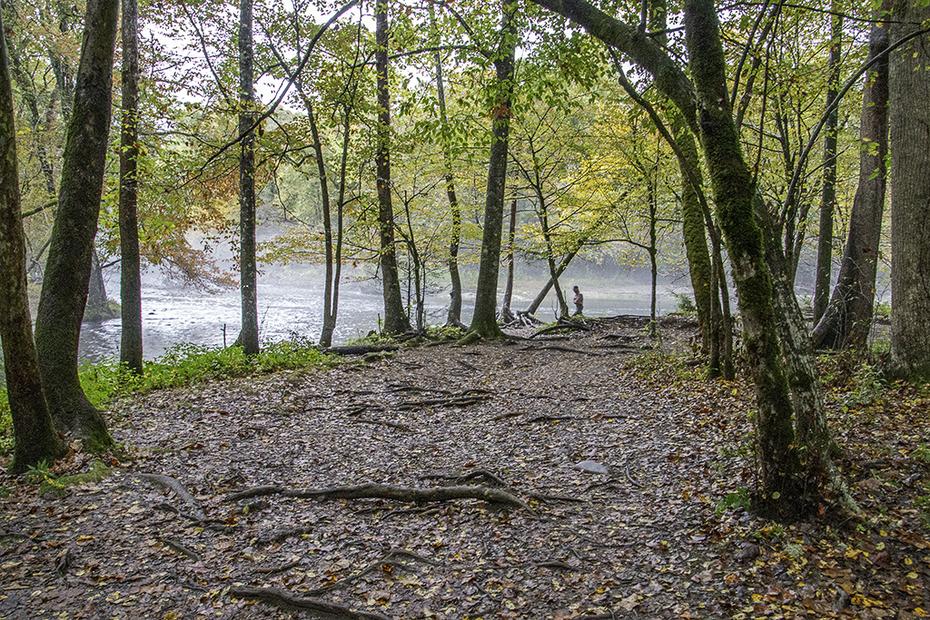 Nice Walk Along the Oconalufteee River