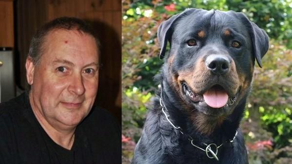 Un père de famille meurt dévoré par son chien qui avait déjà attaqué des enfants