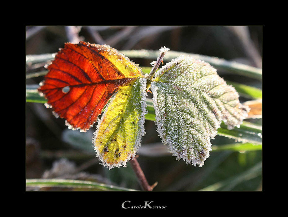 Wintry Leaves I