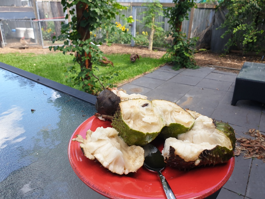 First home grown soursop