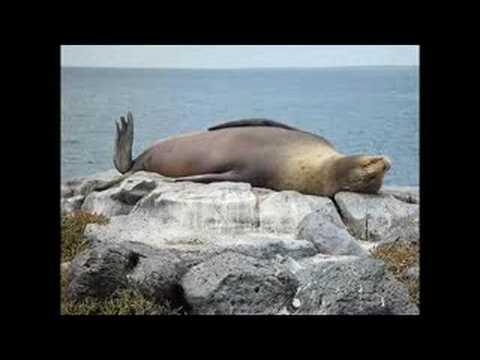 Animals & Nature (I'm Alive - Celine Dion)