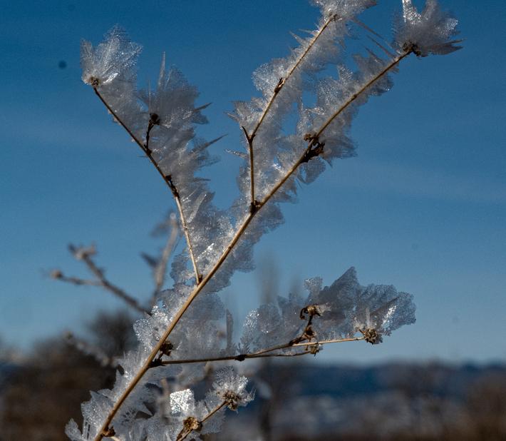 hoary frost 4