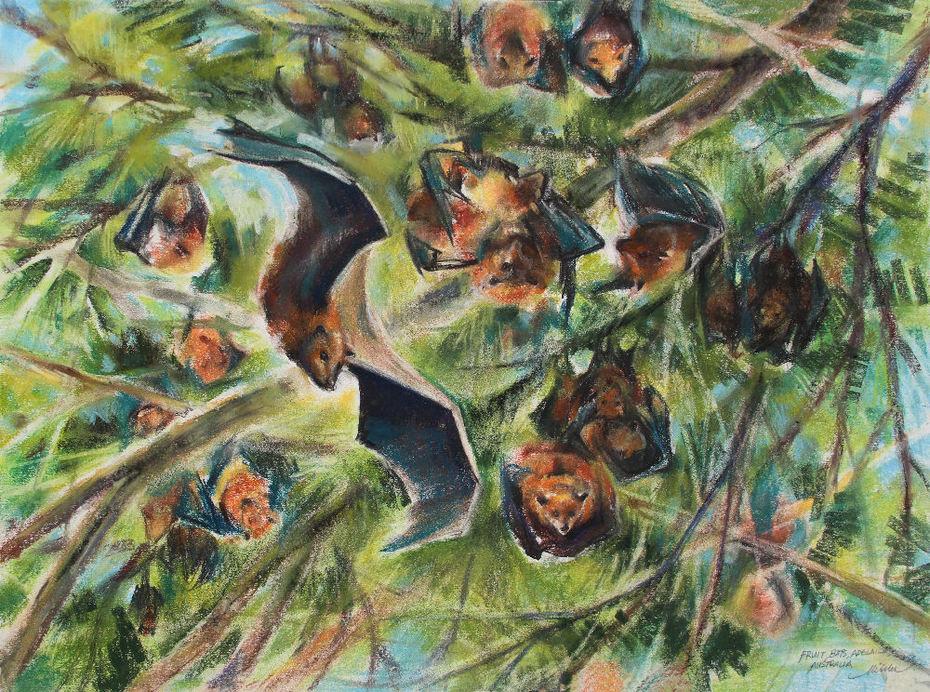 Fruit Bats, Adelaide Australia