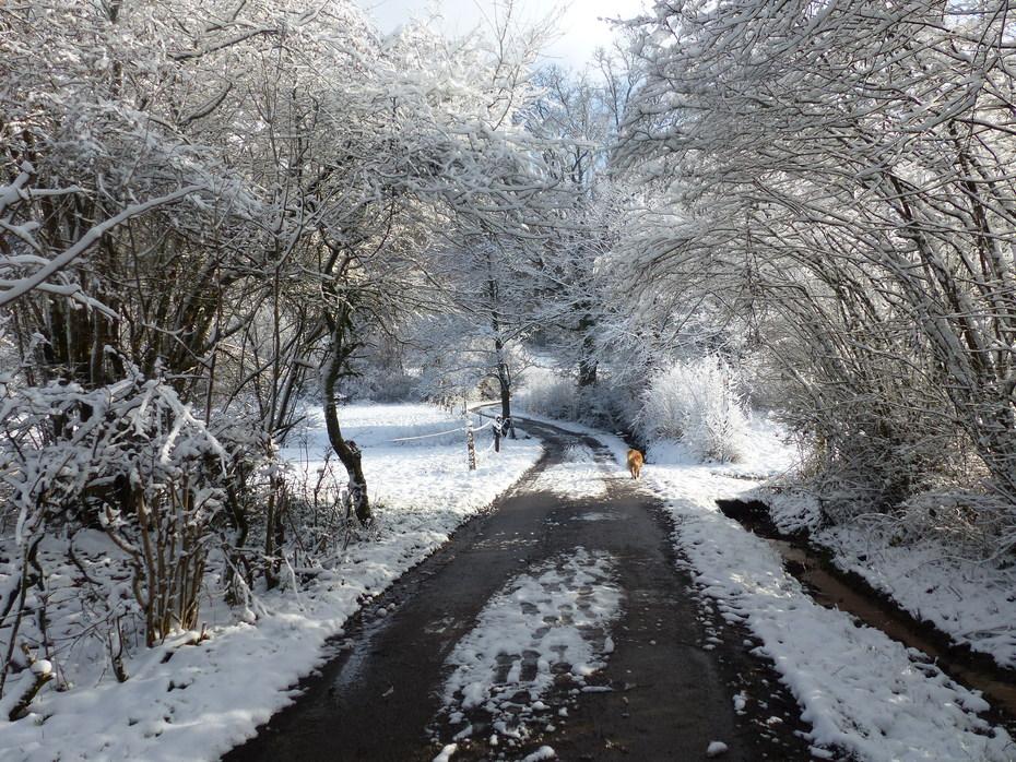 Quelques pas dans la neige...