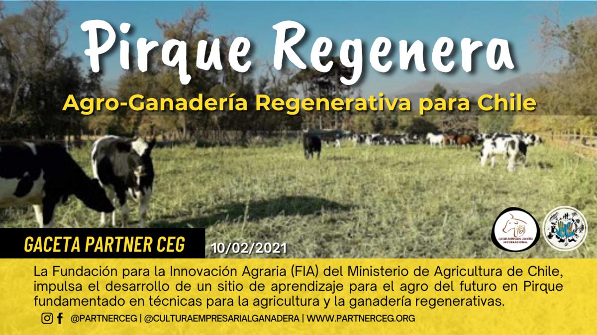 Pirque Regenera: Agroganadería Regenerativa para Chile