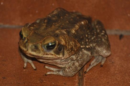 rincon les grenouilles du jardin