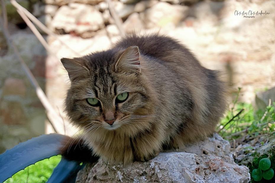 Μια κούκλα γάτα στην Πλάκα...