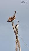 Birds galore!