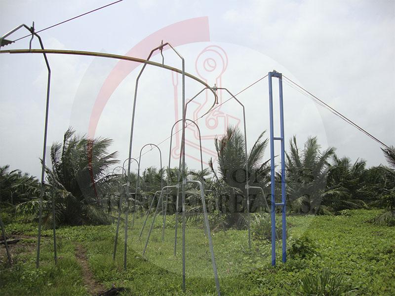 Cable vía para palma africana