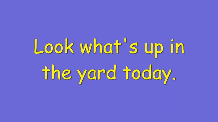 What's up in the yard trailer 1