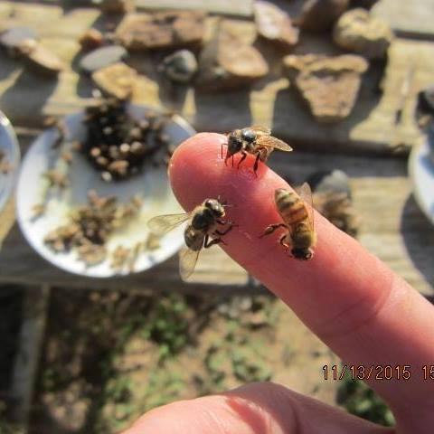 BeesGatheredonPicnicTable