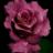 VIVENDO NA CIRCULAÇÃO DO AMOR DIVINO MENSAGEM DOS ANJOS Através de Ann Albers 1º de Maio de 2021