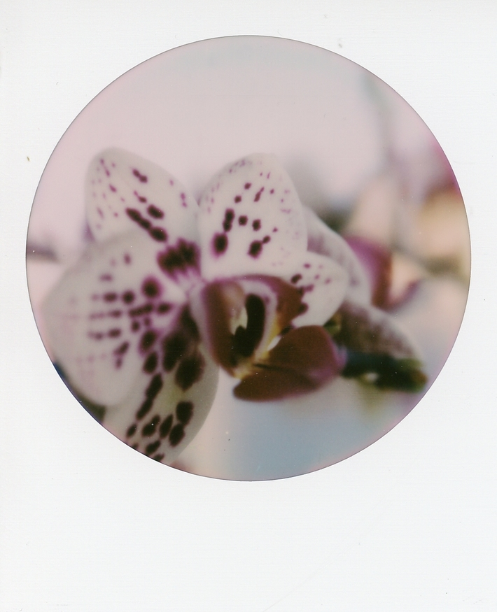 blooms 03