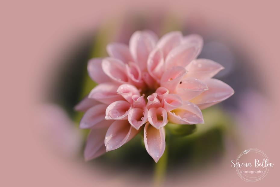 la tenerezza di un fiore