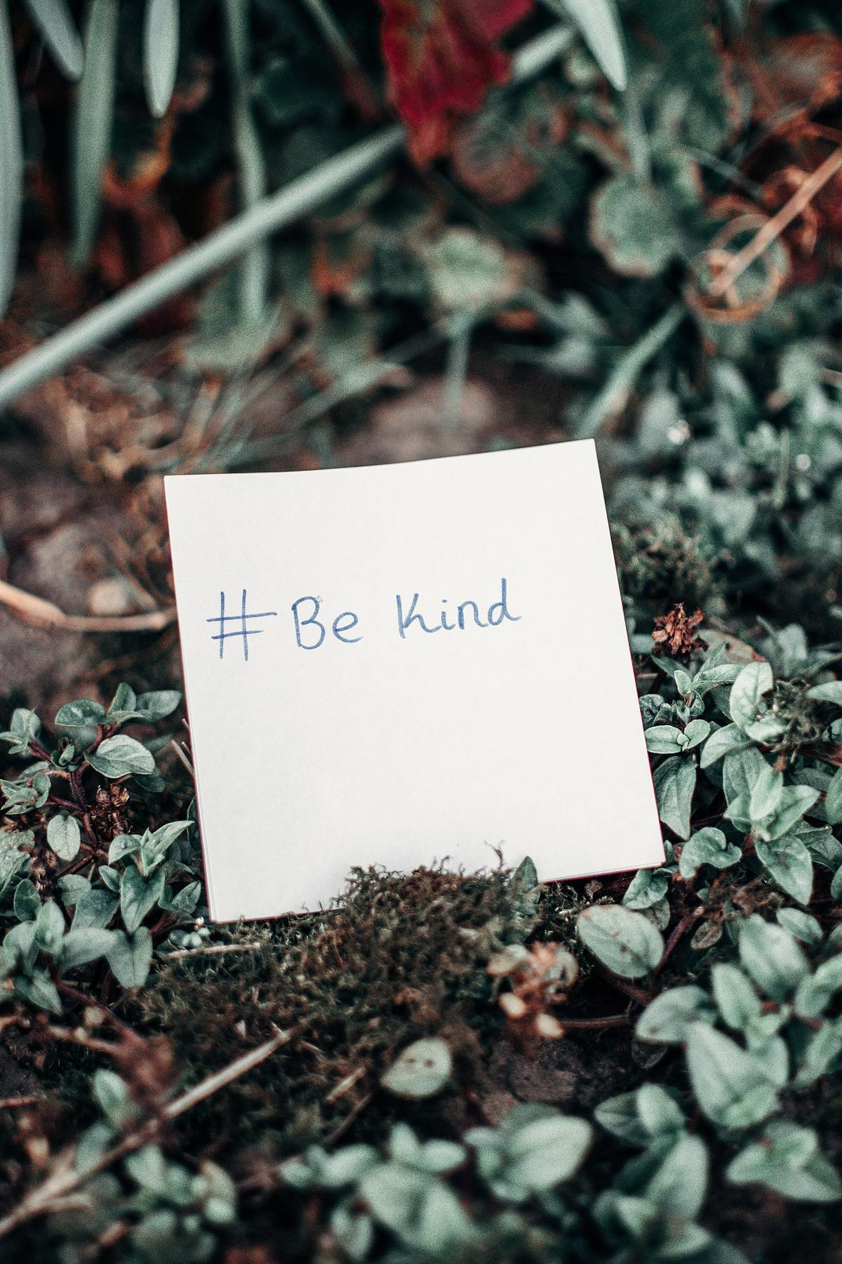 Daily Devotional: The Fruit of the Spirit: Kindness