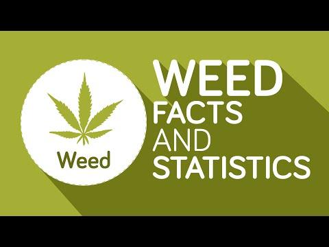 Colorado dispensary shipping worldwide | Buy Marijuana Online Cheap