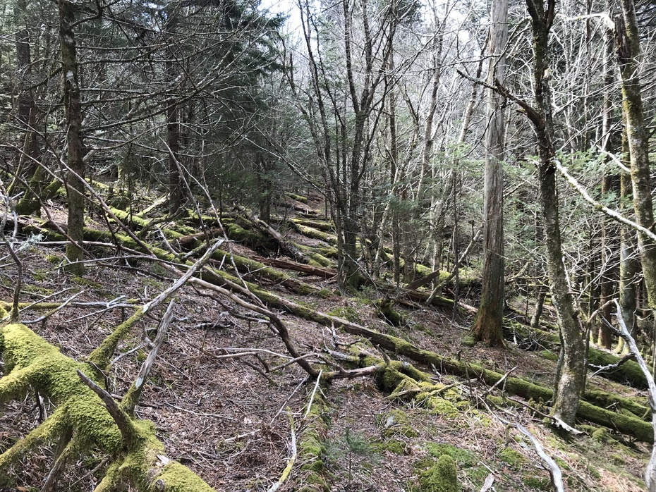 Old Hyatt Ridge Trail - Toward Mark's Knob