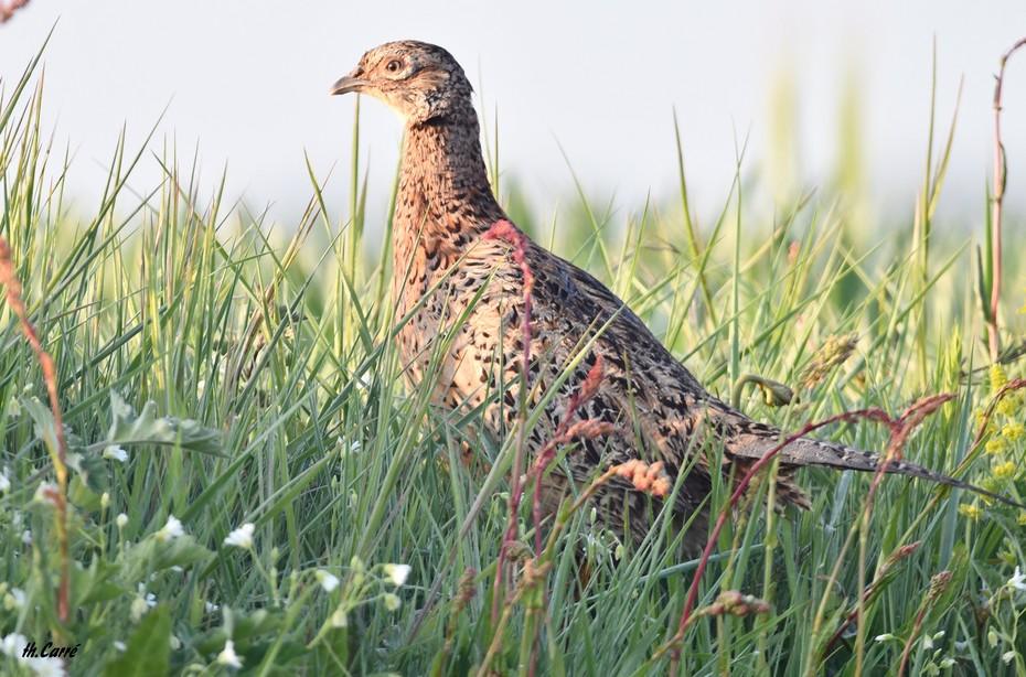 oiseaux  3650 JPG
