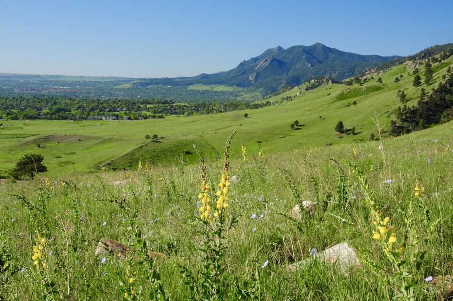 Boulder, the Flatirons and wildflowers from the Hogback Loop
