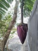 BANANA ON THE STREET