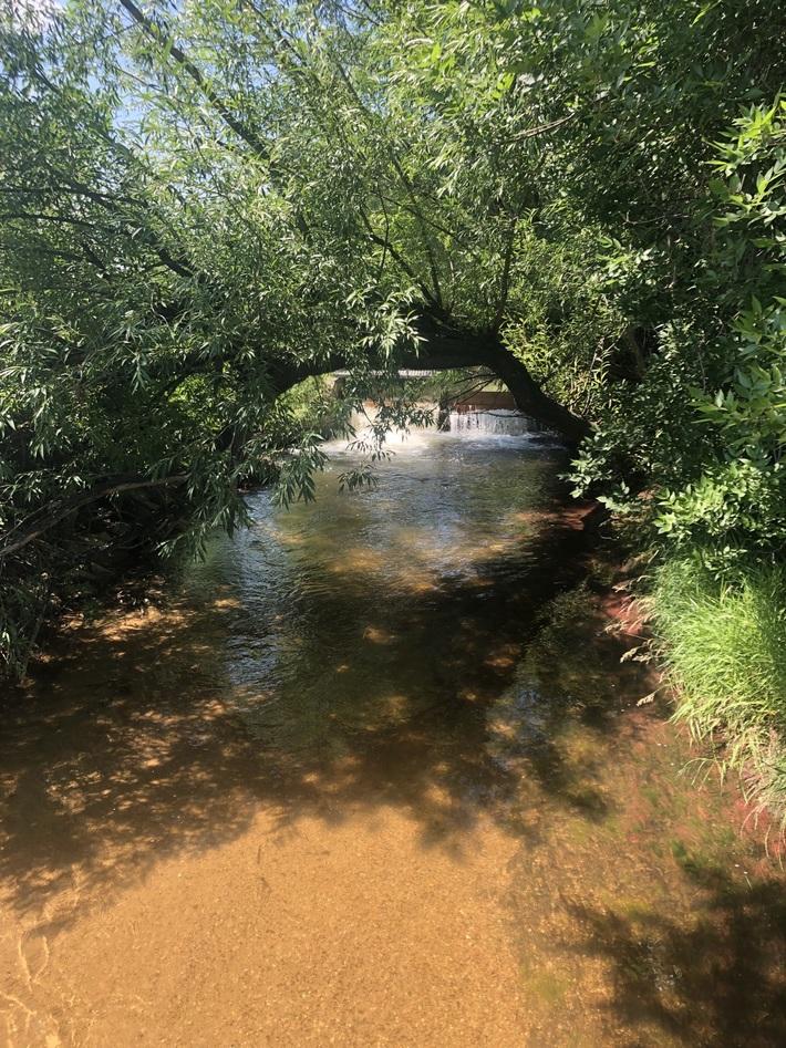 Cool on Cottonwood Trail