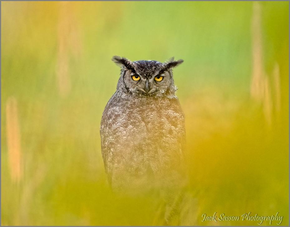 Owl through the leaves