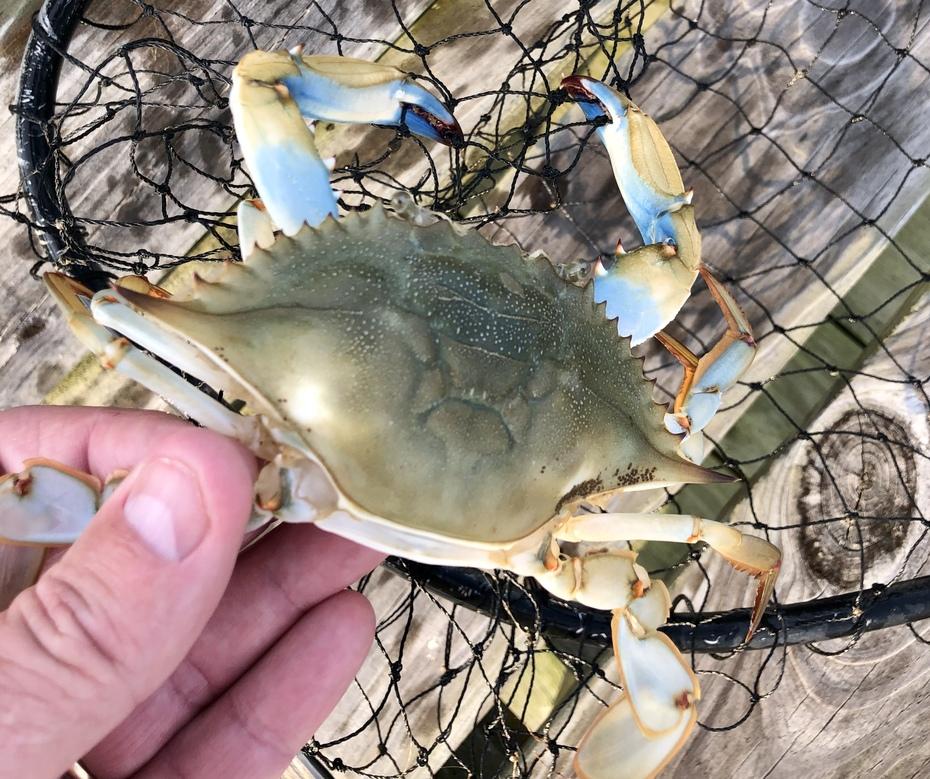 Crab Fishing on The Albemarle…..7/16/2021