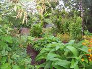 Learn about Making a Compost Heap and Worm Farming