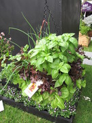 Free Workshop: Food Gardens in Containers & Small Spaces