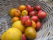 Growing Fruit in Pots and small spaces