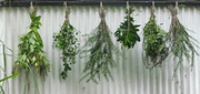 Herb Awareness - A Queensland Herb Society Annual Event