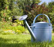 Low cost gardening with Annette McFarlane