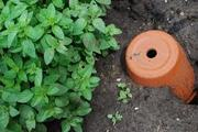 WATER-WISE CLAY OLLA POT MAKING