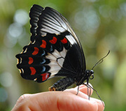 Introduction to butterfly gardening
