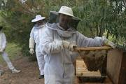 Introduction to Natural Beekeeping Workshop