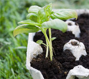 Make your own bean sprout farm