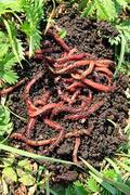 COMPOST AND WORM FARM WORKSHOP