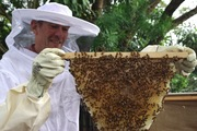 TOP BAR BEEKEEPING WORKSHOP