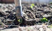 From The Ground Up - Urban Food Forests