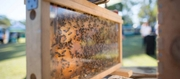 Bees and the buzz in the hive with Lisa Kelly from Three Fat Bees Farm