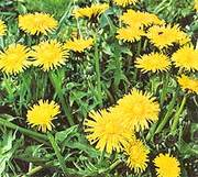 MANAGE YOUR WEEDS