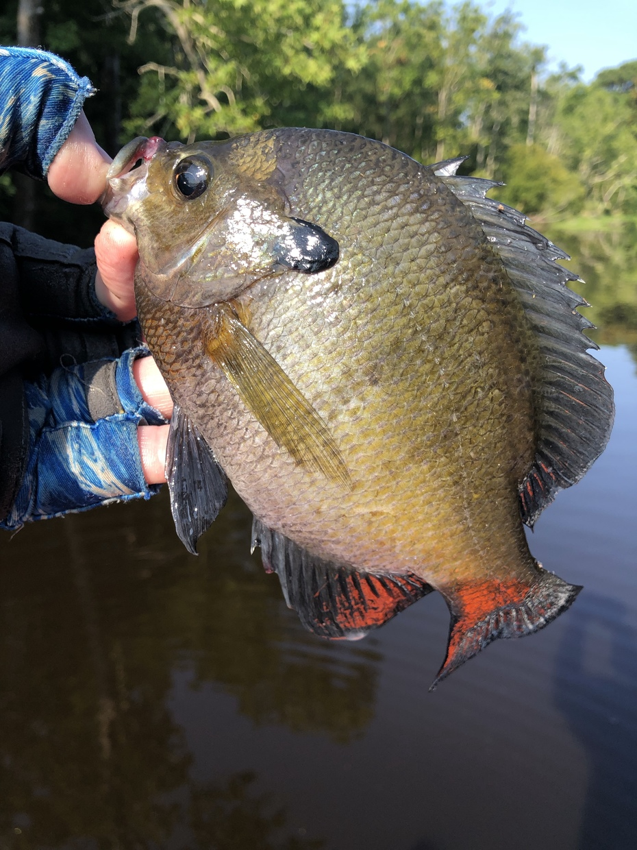 My Last Gill of The Trip……7/24/2021