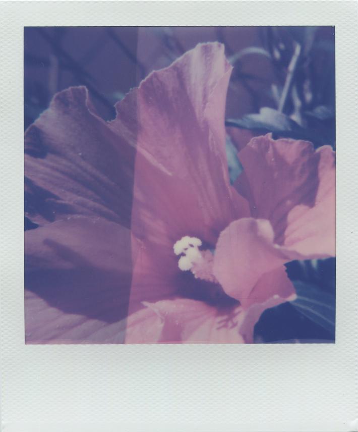 Dance of petals