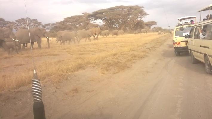 Wildebeest Migration Masai Mara,Kenya,Kenya Adventure Safaris, Active Adventures, YHA Kenya Travel…