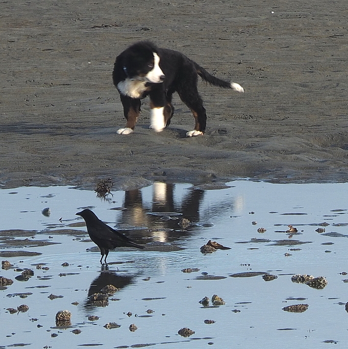 Crow and Puppy