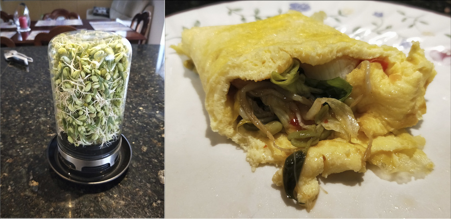 Asian sprout omelette